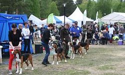 Provincial Dog Shows