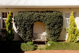 Lemon-Tree-garden